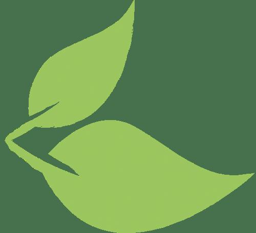 Salat-Blatt links